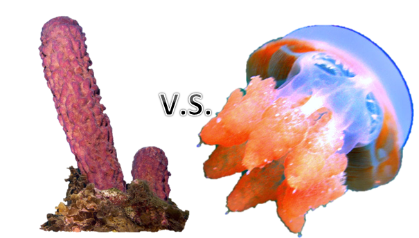 Flatworms And Cnidarians Porifera V.S. C...